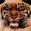 Значение татуировки «Тигр» - фото