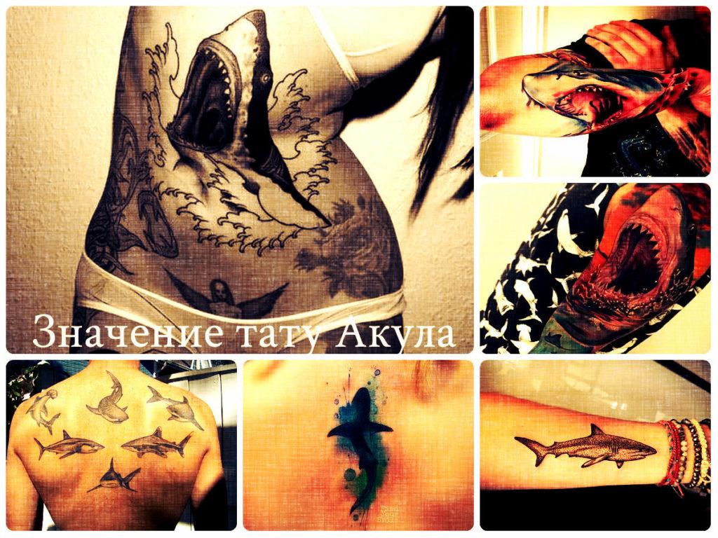 Значение тату Акула - коллекция фотографий готовых рисунков татуировки