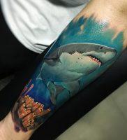 фото тату Акула от 15.11.2017 №012 — Shark Tattoo — tattoo-photo.ru