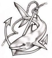 фото тату Акула от 15.11.2017 №017 — Shark Tattoo — tattoo-photo.ru