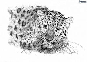 фото тату Леопард от 18.11.2017 №087 - tattoo Leopard - tattoo-photo.ru