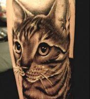 фото тату кошка от 19.11.2017 №006 — cat tattoo — tattoo-photo.ru