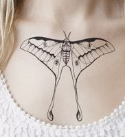 фото тату мотылек от 17.11.2017 №113 — moth tattoos — tattoo-photo.ru