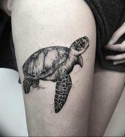 фото тату с животными от 14.11.2017 №016 — animal tattoos — tattoo-photo.ru