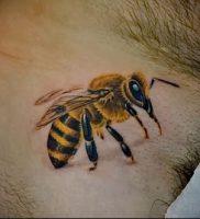 фото тату пчела для статьи про значение татуировки пчела — 26
