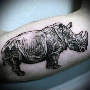 фото тату носорог (rhino tattoo) (значение) - пример рисунка - 011 tatufoto.com