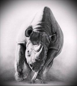 фото тату носорог (rhino tattoo) (значение) - пример рисунка - 019 tatufoto.com