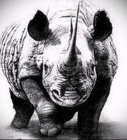 фото тату носорог (rhino tattoo) (значение) — пример рисунка — 042 tatufoto.com