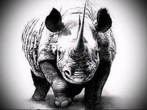 фото тату носорог (rhino tattoo) (значение) - пример рисунка - 042 tatufoto.com
