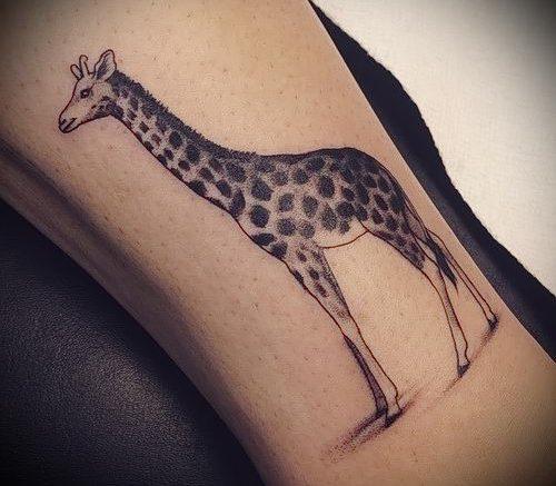 фото тату ЖИРАФ (Tattoo giraffe) (значение) - пример рисунка - 023 tatufoto.com
