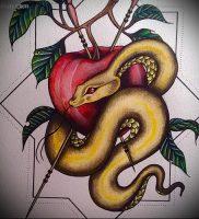 фото тату С ЯБЛОКОМ (Tattoo apple photo) (значение) — пример рисунка — 032 tatufoto.com