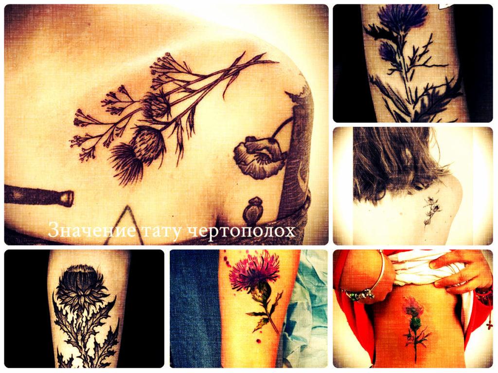 Значение тату чертополох - фото примеры рисунков татуировки