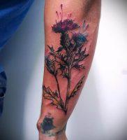 Фото татуировки чертополох — пример рисунка — 26052017 — пример — 005 Tattoo thistles