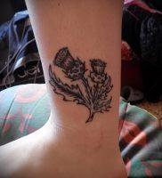 Фото татуировки чертополох — пример рисунка — 26052017 — пример — 012 Tattoo thistles