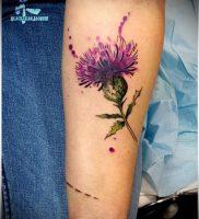 Фото татуировки чертополох — пример рисунка — 26052017 — пример — 015 Tattoo thistles