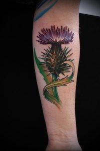 Фото татуировки чертополох - пример рисунка - 26052017 - пример - 024 Tattoo thistles