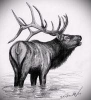 Фото тату лось — 30052017 — пример — 006 tattoo elk