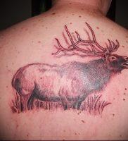 Фото тату лось — 30052017 — пример — 010 tattoo elk