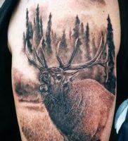 Фото тату лось — 30052017 — пример — 053 tattoo elk