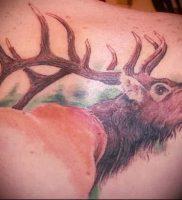 Фото тату лось — 30052017 — пример — 056 tattoo elk