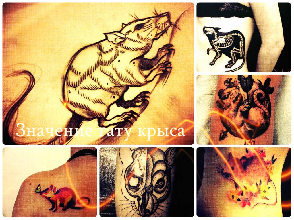 Значение тату крыса - фото примеры рисунков для татуировки