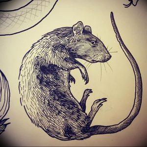 фото тату крыса от 27.07.2017 №017 - Rat tattoo_tattoo-photo.ru