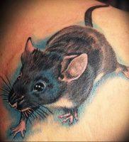 фото тату крыса от 27.07.2017 №080 — Rat tattoo_tattoo-photo.ru