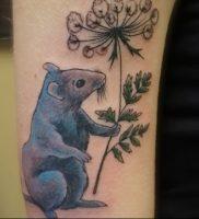 фото тату крыса от 27.07.2017 №091 — Rat tattoo_tattoo-photo.ru