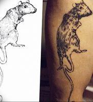 фото тату крыса от 27.07.2017 №100 — Rat tattoo_tattoo-photo.ru