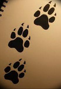 фото тату медвежья лапа от 30.09.2017 №050 - bear paw tattoo - tattoo-photo.ru