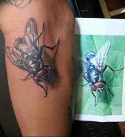фото тату муха от 22.09.2017 №003 — Fly Tattoo — tattoo-photo.ru