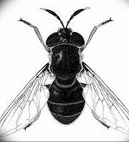 фото тату муха от 22.09.2017 №013 — Fly Tattoo — tattoo-photo.ru