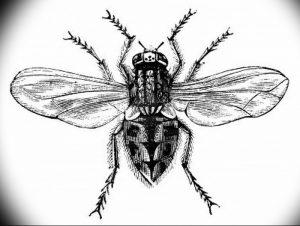 фото тату муха от 22.09.2017 №030 - Fly Tattoo - tattoo-photo.ru