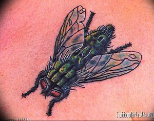 фото тату муха от 22.09.2017 №046 - Fly Tattoo - tattoo-photo.ru