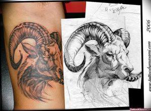 фото тату баран от 21.10.2017 №026 - tattoo ram - tattoo-photo.ru