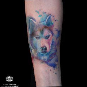 фото тату хаски от 07.10.2017 №012 - tatu husky - tattoo-photo.ru