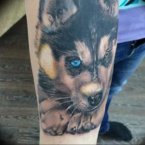 фото тату хаски от 07.10.2017 №014 - tatu husky - tattoo-photo.ru