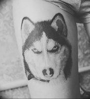 фото тату хаски от 07.10.2017 №015 — tatu husky — tattoo-photo.ru