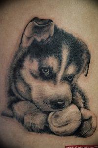 фото тату хаски от 07.10.2017 №022 - tatu husky - tattoo-photo.ru