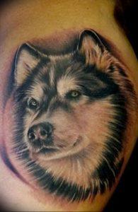 фото тату хаски от 07.10.2017 №023 - tatu husky - tattoo-photo.ru
