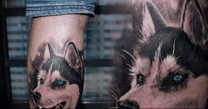 фото тату хаски от 07.10.2017 №034 - tatu husky - tattoo-photo.ru