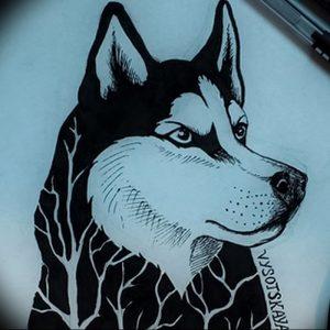 фото тату хаски от 07.10.2017 №054 - tatu husky - tattoo-photo.ru