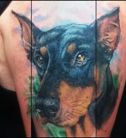 фото тату доберман от 21.11.2017 №002 — Doberman tattoo — tattoo-photo.ru