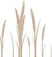 фото тату колос пшеницы от 27.12.2017 №015 — tattoos ear of wheat — tattoo-photo.ru