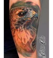 фото тату ястреб от 27.01.2018 №013 — tattoo hawk — tattoo-photo.ru