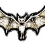 фото Эскизы тату летучая мышь от 11.04.2018 №016 - Sketches bat tattoo - tattoo-photo.ru
