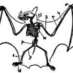 фото Эскизы тату летучая мышь от 11.04.2018 №019 - Sketches bat tattoo - tattoo-photo.ru