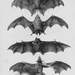 фото Эскизы тату летучая мышь от 11.04.2018 №073 - Sketches bat tattoo - tattoo-photo.ru
