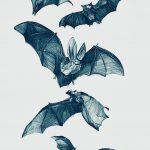 фото Эскизы тату летучая мышь от 11.04.2018 №104 - Sketches bat tattoo - tattoo-photo.ru 6234262344