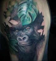 фото тату горилла от 27.03.2018 №110 — gorilla tattoo — tattoo-photo.ru